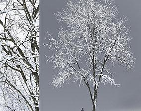 3D Ash-tree 03 winter 17m snow