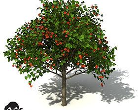 3D model XfrogPlants Paper Mulberry