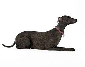 3D model Black Greyhound Dog