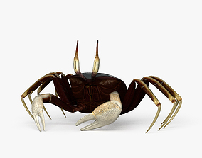 3D model Horned Ghost Crab HD