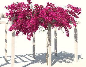 Bougainvillea-04 3D model