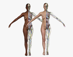 Female Full Body Anatomy Combo 3D