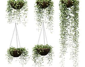 hanging Hanging ivy in pots - 5 models