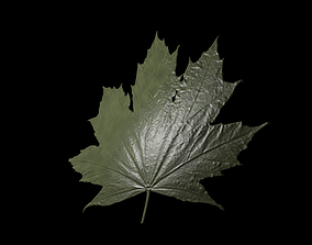 Japanese maple Acer Plat 3D printable model