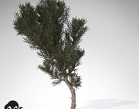 3D model XfrogPlants Prickly Juniper