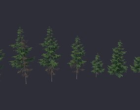 3D asset Conifer