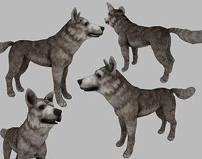 3D asset rigged wolf dog
