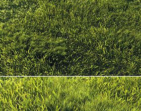Scanned real grass01 3D asset