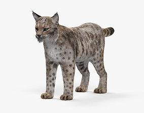 3D model Bobcat HD