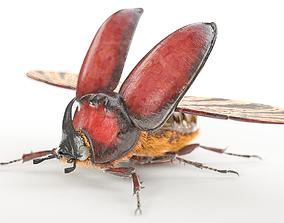 3D model rigged Rhinoceros Beetle