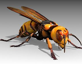 Giant Hornet 3D asset animated