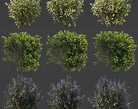 Hedge shrubs vol 1 3D model