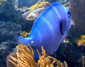 ocean 3D model Blue Tang Fish