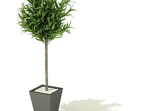 Plant With Pot Shaded 3D