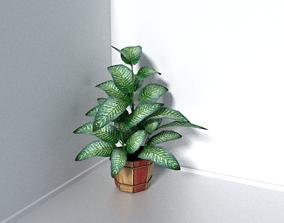 Dieffenbachia seguine potted plant 3D model