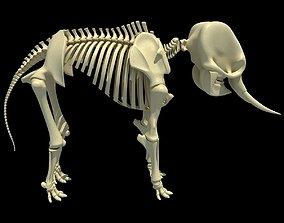 Elephant Anatomic Asian Skeleton 3D model