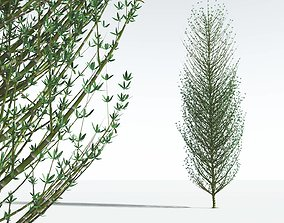EVERYPlant Twisted Horsetail Tree 05 --12 Models-- 3D