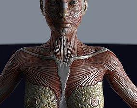 Female muscule anatomy 3D asset