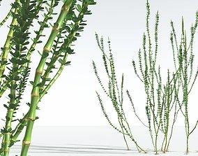 EVERYPlant Hollow-Stemmed Sphenophyllum 02 --16 3D