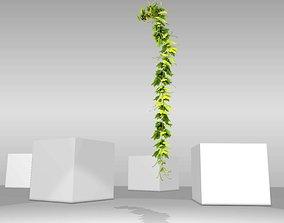 Grape Vine Version 13 3D asset