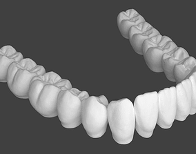 Lower jaw teeth anatomy 3D