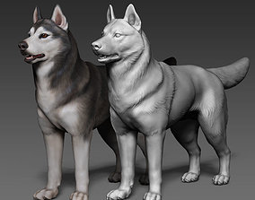 Siberian Husky high polygon 3D model with
