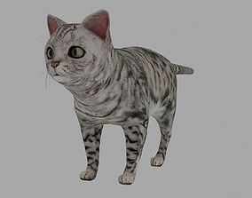 Cat - British Silver Tabby Young 3D asset