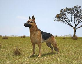 German Shepherd berger 3D model