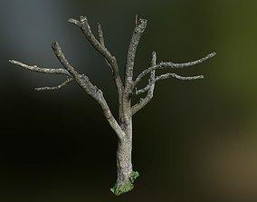 low-poly Tree low poly 3D model