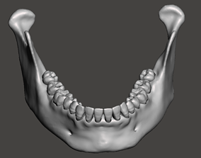 Real human mandibular jaw anatomy with 3D print model