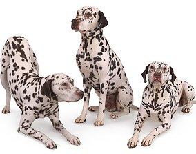 3D Dalmatian Collection x3
