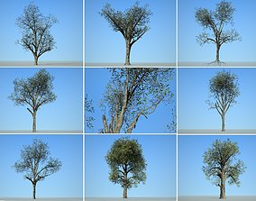 3D model Tree Collection 001