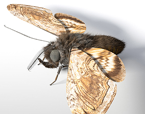 Moth Rigged Hairs 3D asset