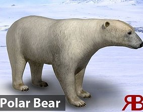 Polar Bear 3D asset animated