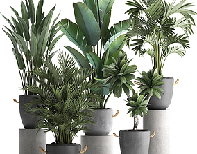 3D Collection of Exotic Plants 402