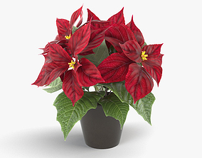 3D model Poinsettia