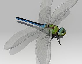 Dragonfly Animated 3D model