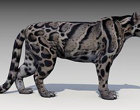 3D asset Clouded Leopard