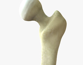 3D Femur Joint Bone