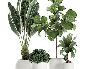 3D Plants in a white pot for the interior 666