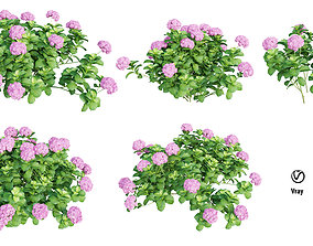 nature Plants Hydrangea set 05 3D