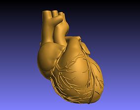 human heart 3D printable model