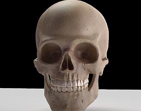 3D model jaw Skull