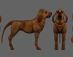 bloodhound dog 3D asset