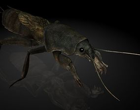 Insect Collection 15 mole cricket 3D model