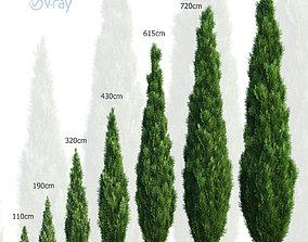 Thuya tree Set - 7 models 3D cypress