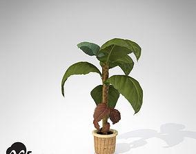 3D XfrogPlants Banana