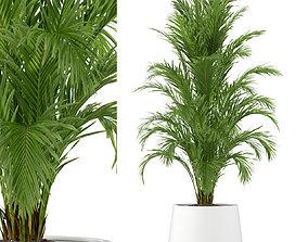Plants collection 248 pot-plant 3D model