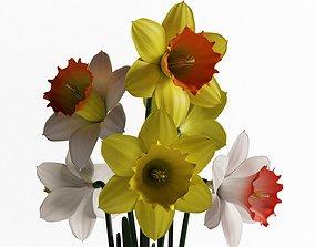 3D Daffodils