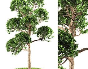 3D tree 119-1
